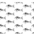 carp on white background vector image