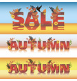 set autumn sale poster design template vector image