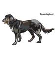 dog shepherd vector image