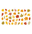 autumn leaves set in bright colors vector image