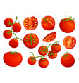 Tomatoes collection chopped tomatoes isolated