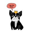 Dog French bulldog queen fun symbol isolate on vector image