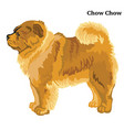colored decorative standing portrait of chow chow vector image vector image