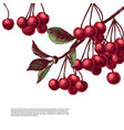 colorful background with cherry branches vector image