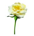 yellow rose vector image