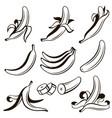 banana fruit set vector image