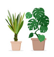 Green monstera and palm