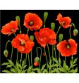 spring flowers poppy vector image vector image
