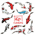 set koi carps japanese fish colored korean vector image vector image
