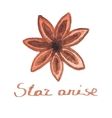 Watercolor star anise on the white background vector image