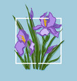 bouquet with irises vector image