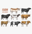 farm cattle bulls and cows natural milk and meat vector image vector image