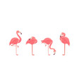 set of flamingos isolated on white background vector image vector image