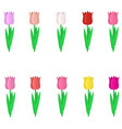 set of multi-colored tulips on a white background vector image