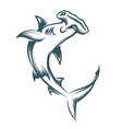 hammer head shark engraving vector image vector image