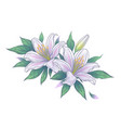hand drawn bunch with white lily flowers vector image vector image