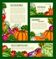 vegetables havest banners and posters set vector image vector image