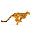 gepard running cheetah animal hunter in wild vector image