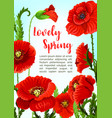 poppy flowers for spring time holidays vector image vector image