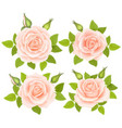 set of roses flowers vector image vector image