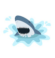 white shark with open mouth vector image vector image