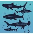 Shark silhouettes set Sea fish animal vector image