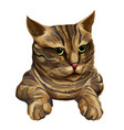 brown striped cat with green eyes head and paws vector image vector image