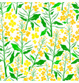 floral seamless pattern summer field vector image