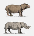 hippopotamus and black or white rhinoceros hand vector image vector image
