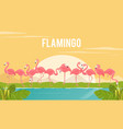 set of flamingos on background vector image vector image