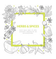 herbs and spices banner template square frame vector image vector image