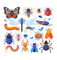 insects collection - set flat design style vector image