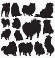 pomeranian silhouettes vector image vector image