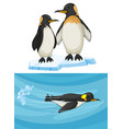 penguin swimming and standing on ice vector image