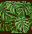 summer tropical background with exotic leaves vector image vector image