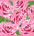 bright pink roses background vector image vector image