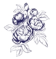 floral blooming rose branch vector image vector image