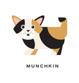 munchkin kitten with funny muzzle cartoon vector image
