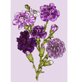 Purple Sketch of a Carnation vector image vector image