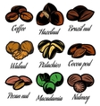 set colored symbols patterns different seeds vector image vector image