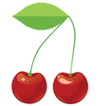 Two red ripe cherries on a shank vector image vector image