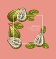 guava hand drawn vector image vector image