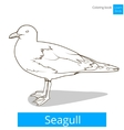 seagull learn birds coloring book vector image vector image