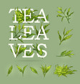 colourful banner of tea with leaves elements and vector image