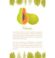 papaya exotic fruit poster text palm leaves vector image