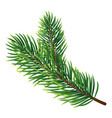 pine tree branch icon realistic style vector image