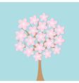 Sakura tree flowers Japan blooming cherry blossom vector image