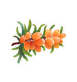 sea buckthorn isolated in 3d style vector image