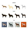 st bernard retrieverdoberman labrador dog vector image vector image