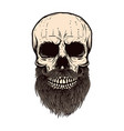 bearded skull on white background design element vector image vector image